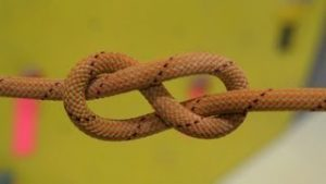 Figure-Eight-Survival-Knot