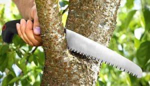 Folding-Saw-Pruning-Trees
