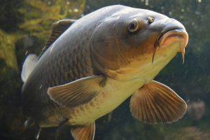 fish-antibiotics